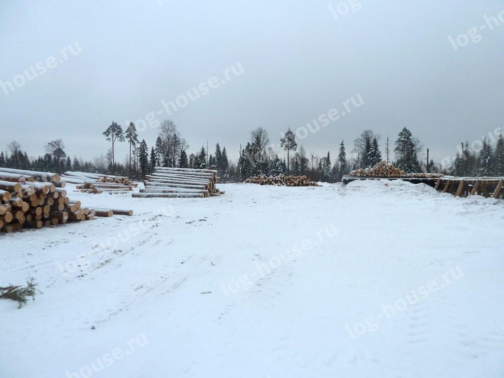 Лес перед заготовкой ОЦБ