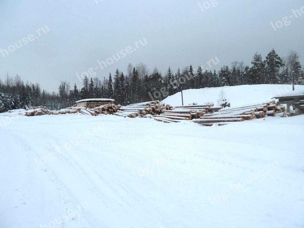 Зимний лес из Архангельской области