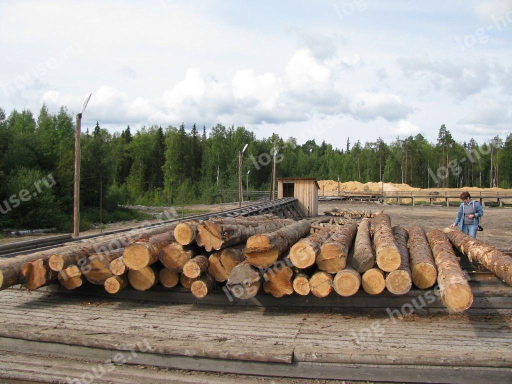 Неокоренный лес перед обработкой на производстве