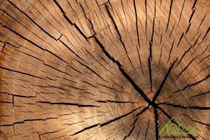 Уменьшение растрескивания древесины